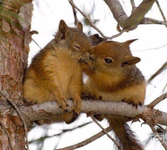 Любовь, любовь...